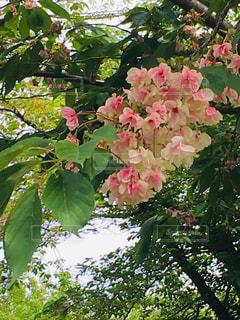 桜の写真・画像素材[2054502]
