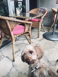 犬カフェで同系色の遠近法かな。の写真・画像素材[2069290]