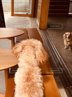 犬,カフェ,後ろ姿,茶色,犬カフェ,カフェタイム,ドックカフェ,インスタ映え