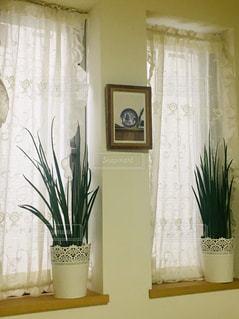 レースのカーテンとレースの植木鉢。の写真・画像素材[2165968]