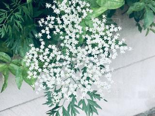 白壁と白い小花。の写真・画像素材[2229852]