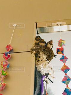 壁につばめの巣。の写真・画像素材[2229877]
