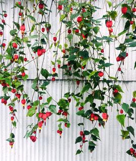 白いトタン壁と花。の写真・画像素材[2246112]