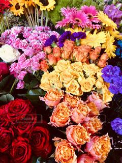 カラフルな花の写真・画像素材[2341776]