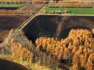 十勝平野の紅葉 空からの写真・画像素材[2570512]