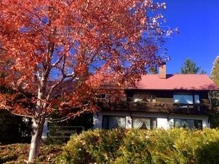 赤い屋根と赤い紅葉のマッチの写真・画像素材[2570528]