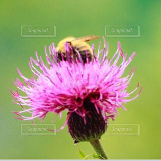 花のクローズアップの写真・画像素材[2277697]