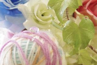 水,水滴,バラ,毛糸,水玉,雫,しずく