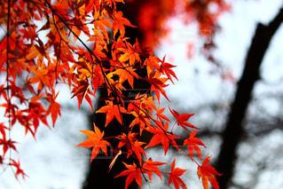 自然,秋,紅葉,屋外,観光,兵庫県,たつの市