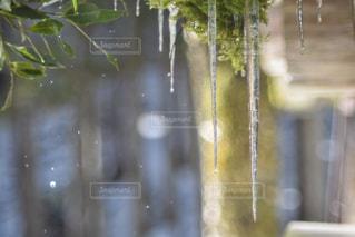 冬,水,水滴,キラキラ,水玉,雫,ボケ,しずく,つらら,氷柱