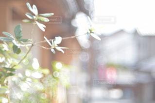花の写真・画像素材[2679497]