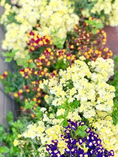 花の写真・画像素材[2034860]