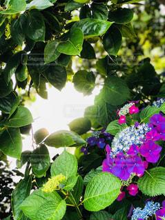 自然の写真・画像素材[2019267]