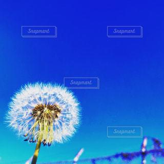 花のクローズアップの写真・画像素材[2272278]