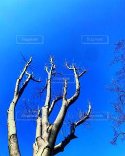 冬,木,屋外,晴れ,晴天,枝,散歩,樹木,お散歩,おでかけ,インスタ映え,枯れている