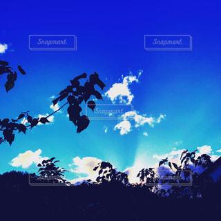 晴れ,青空,晴天,青,黒,枝,葉っぱ,散歩,日光,山,影,光,お散歩,おでかけ,インスタ映え,射す