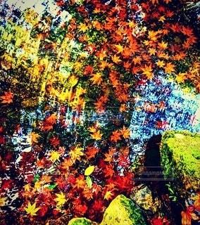 カラフルな花園の写真・画像素材[2512781]