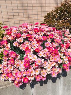 花の写真・画像素材[2038776]