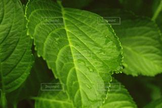 緑,葉,梅雨,草木