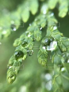 木のクローズアップの写真・画像素材[2187384]