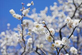 花のクローズアップの写真・画像素材[3016766]