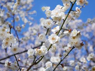 木からぶら下がっている花の写真・画像素材[3016768]