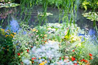 池のある花壇の写真・画像素材[2041404]