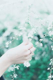 白と緑の写真・画像素材[2023176]