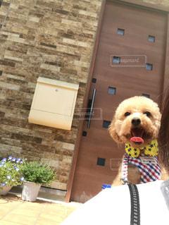 犬,晴れ,爽やか,清々しい,トイプードル,トイプー,天気,わんちゃん