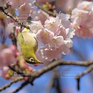春 - No.421177