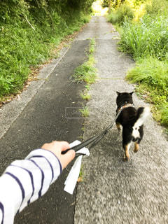 朝のお散歩の写真・画像素材[2148009]
