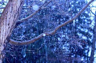 雪,水,水滴,雫