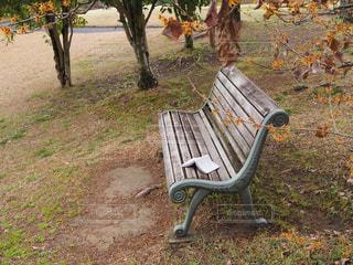 空,公園,秋,屋外,茶色,ベンチ,本,草,地面,ベージュ,ミルクティー色