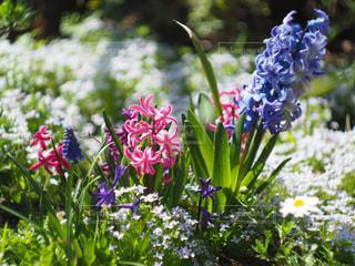 花の写真・画像素材[2027490]