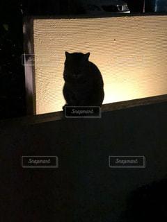 猫,街灯,ネコ,ミルクティー色