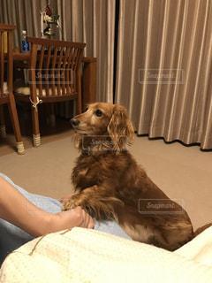 私と犬とのあくしゅの写真・画像素材[2073803]