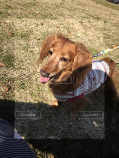 原っぱと犬の写真・画像素材[2074658]