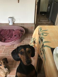 部屋に座っている犬の写真・画像素材[2077671]