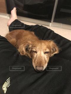 気持ち良さそうに昼寝する犬の写真・画像素材[2077685]