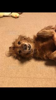 地面に横たわっている犬の写真・画像素材[2078746]