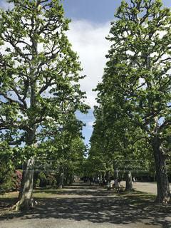 ぽかぽか日和と緑の写真・画像素材[2081596]