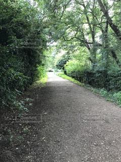 緑の散歩の写真・画像素材[2095953]