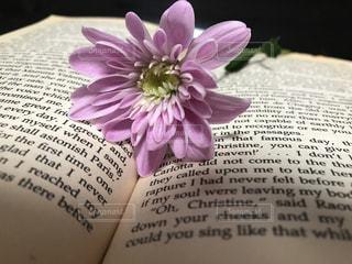 洋書とお花の素敵な時間の写真・画像素材[2140709]