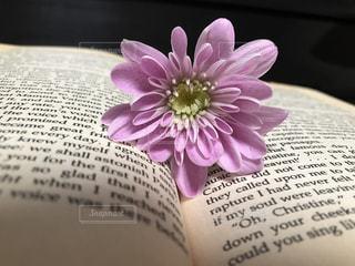 花のある暮らしの写真・画像素材[2142063]