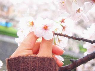 花の写真・画像素材[425663]