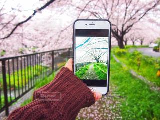 花の写真・画像素材[425683]