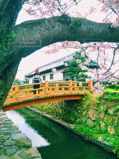 桜,街並み,苔,城下町,山口県,観光名所,長府,私の好きな街