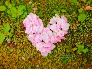春,桜,花びら,ハート