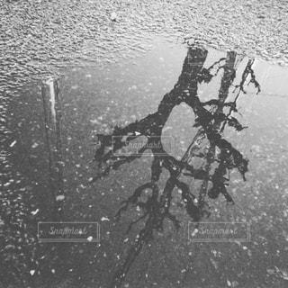 空,木,水たまり,雨上がり