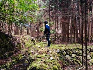森林,木,森,緑,後ろ姿,コケ,人物,背中,人,後姿,旅,杉,ネイチャー,リフレッシュ,倒木